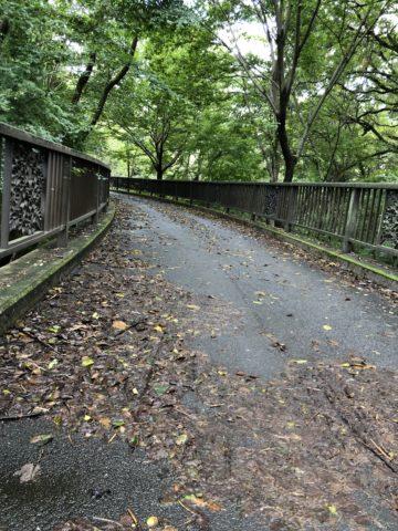 季節の移り変わり-NeoPRIMATO-23-多摩湖自転車道